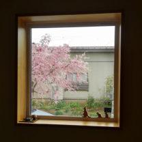 |しだれ桜を眺める暮らし|上越・糸魚川・妙高の工務店|新築・リフォーム|自然素材の注文住宅|キノイエ|カネタ建設|