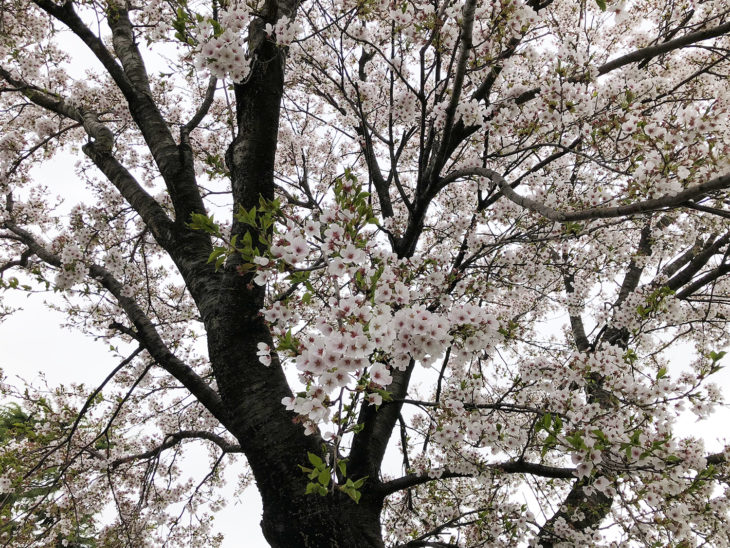 |地鎮祭|上越・糸魚川・妙高の工務店|新築・リフォーム|自然素材の注文住宅|キノイエ|カネタ建設|