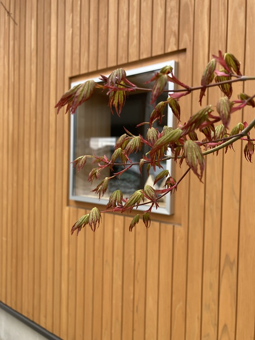 |キノイエ|モデルハウス|塩屋新田の家|上越|春|